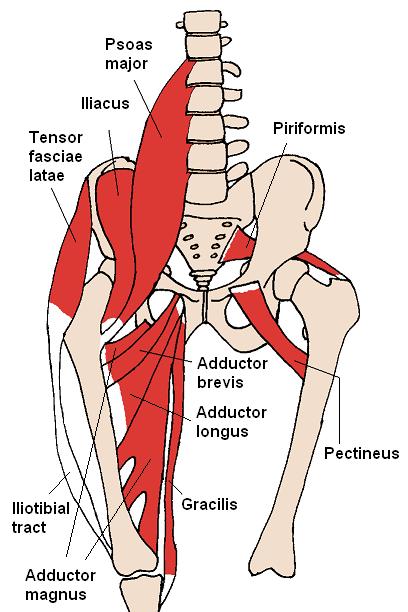Woher kommen denn jetzt die Rückenprobleme? - Orthosport Leichlingen